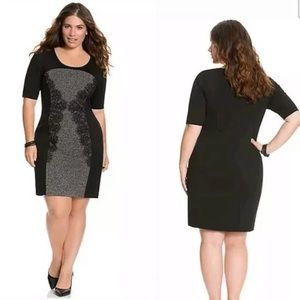 Lace Panel Sheath dress NWT!!!!